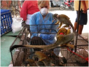 As a Fogarty scholar, Dr. Rosenbaum spent time in Peru studying infectious diseases such as Tuberculosis, in nonhuman primates involved in the wildlife trade.