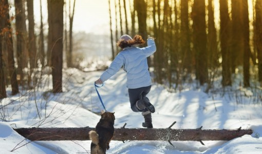 Step It Out With Your Dog This Winter