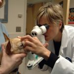 Dog receiving ophthalmologic exam