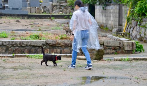 Free-Roaming Cats of Onomichi, Hiroshima: Social Media Stars or Neighborhood Nuisances?