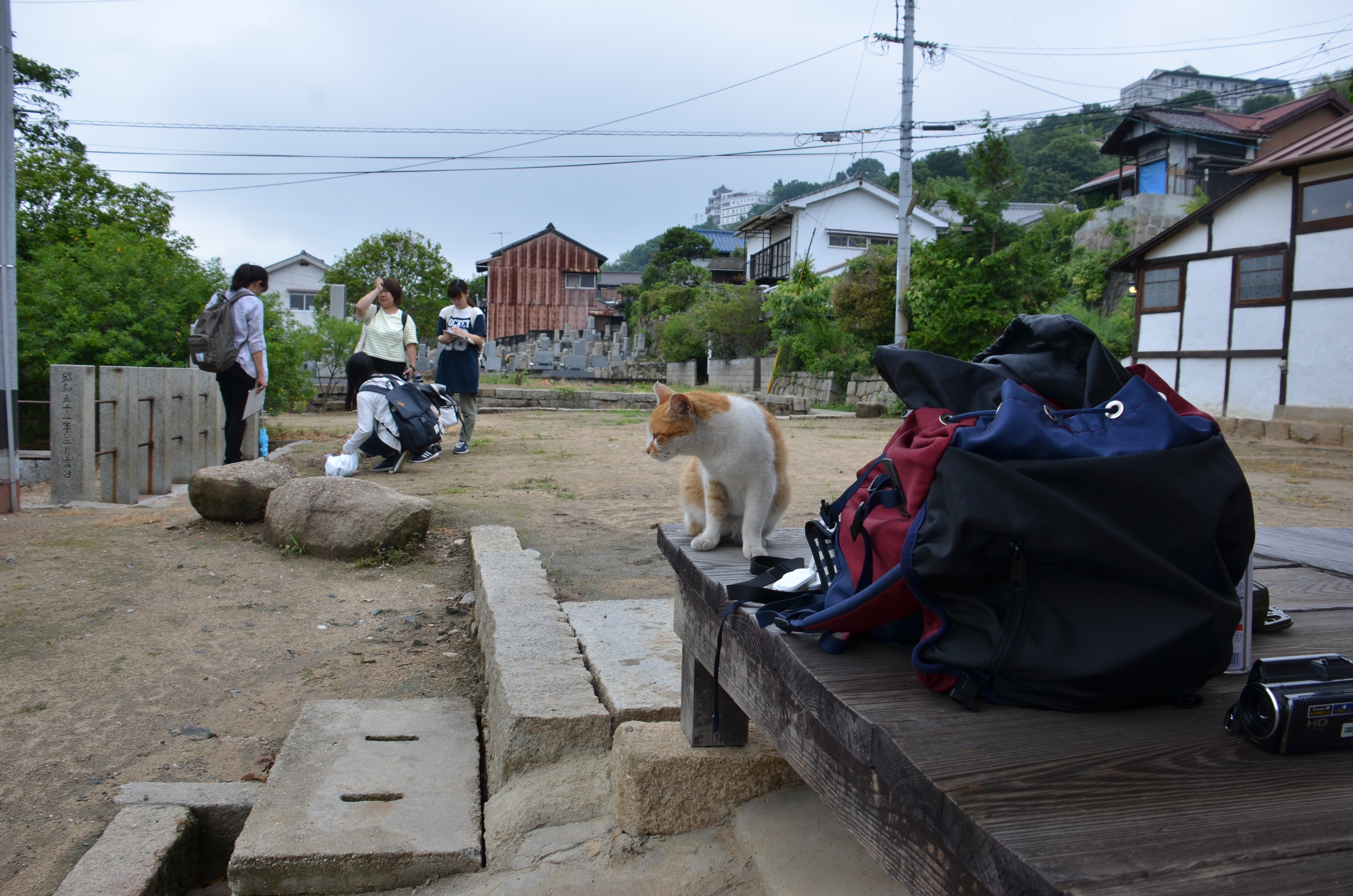 Stephany Ota and some students collecting and cleaning up cat feces