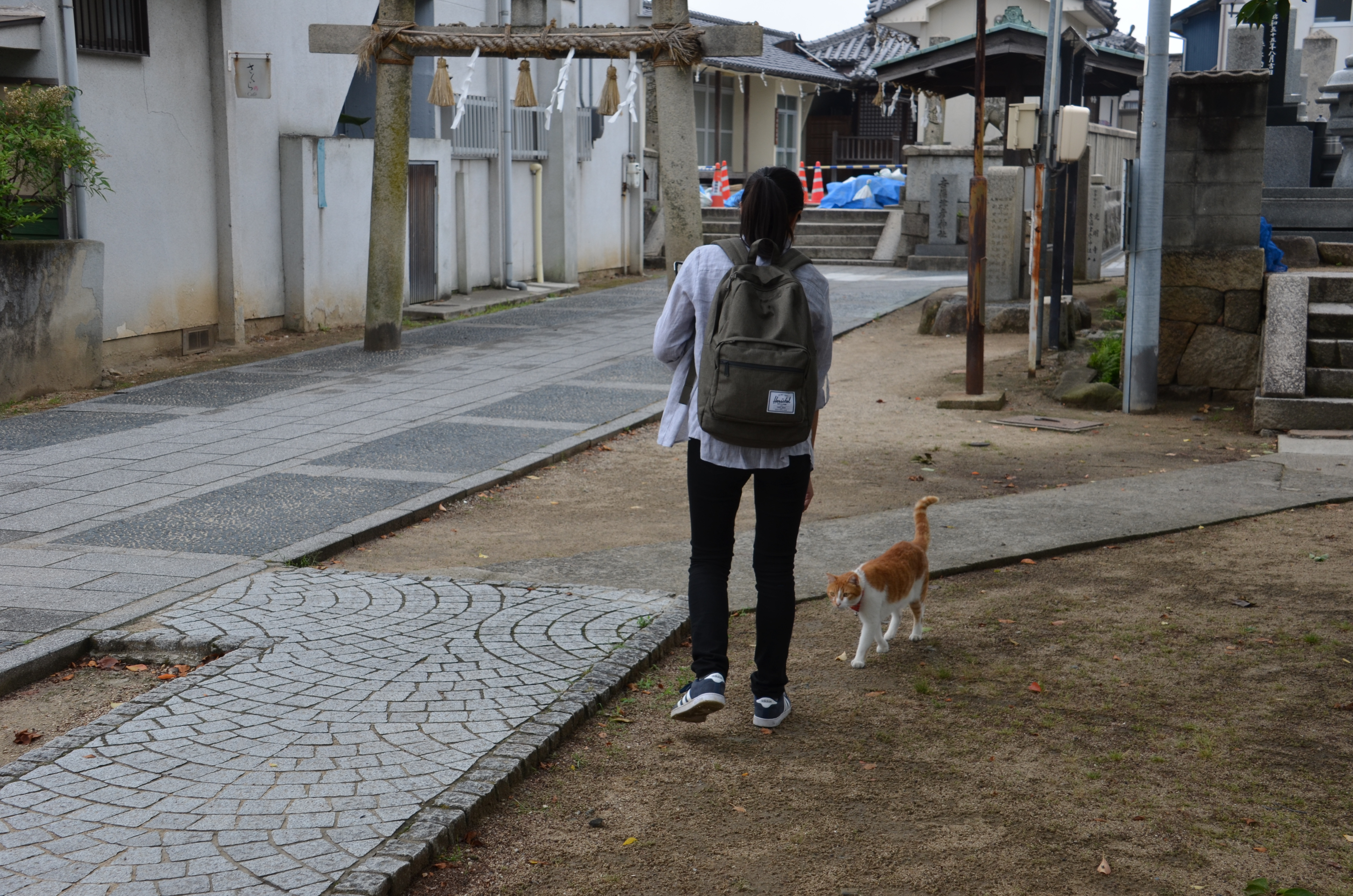 Stephany Ota with a cat at one of the temples in Onomichi with a high population of free-roaming cats
