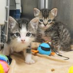 Pick 007 b foundby kittens