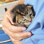 Patients with faculty, students and Residents that visited the Foster Hospital for Small Animals (FHSA)