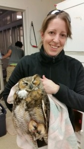 recovering-a-great-horned-owl