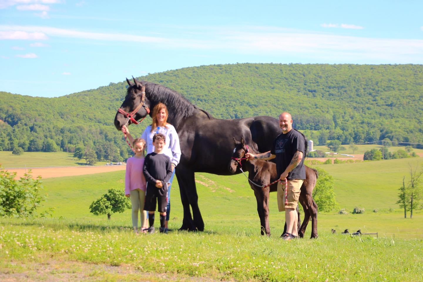 Renaud family posing with their Percheron mare and her filly, Ruby in a field.