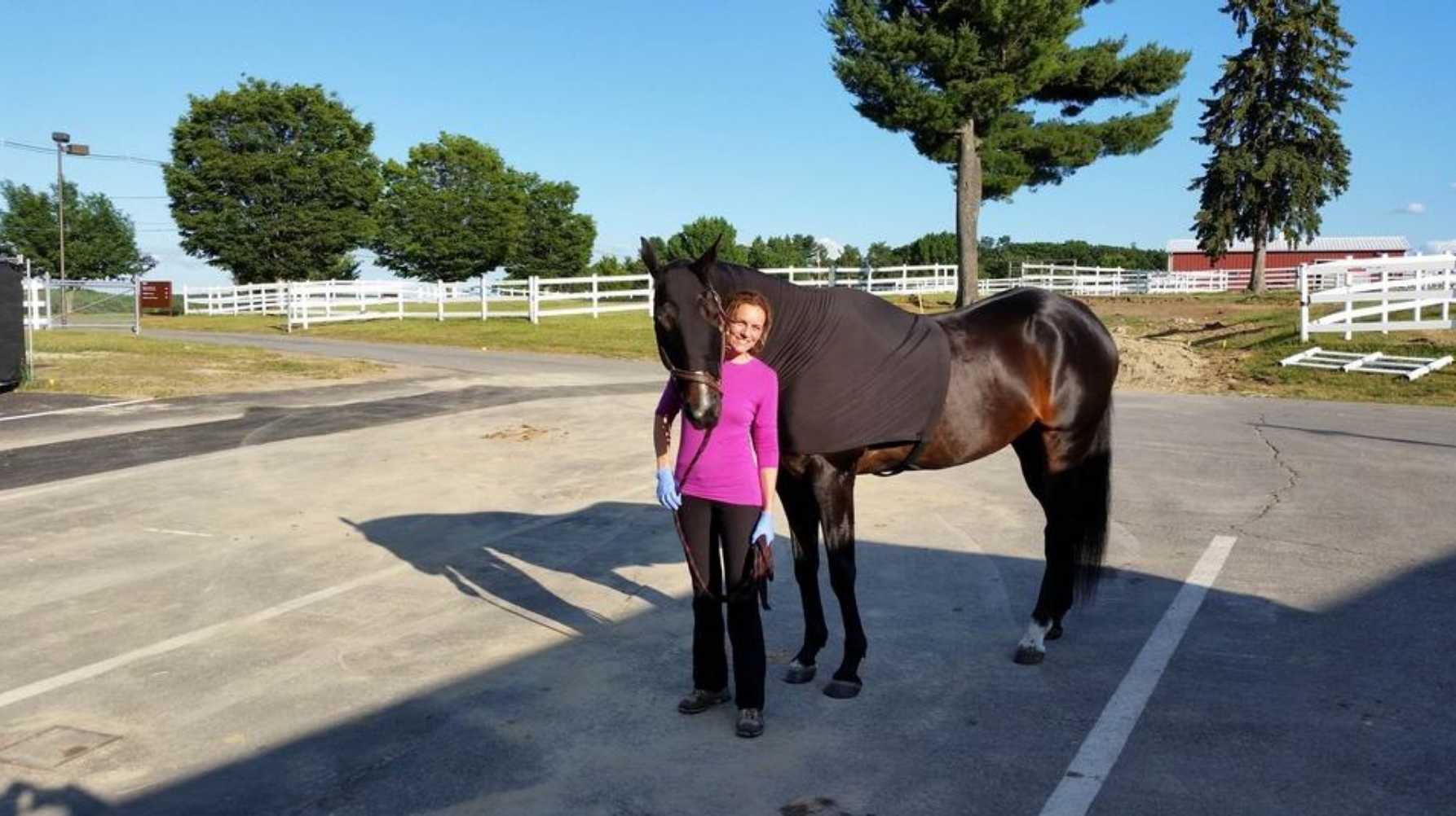 Mountain lion in Petersham? Owner of injured horse says DNA positive for cougar