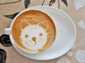 So You Want to Open a Cat Café …..