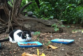 The Plight of the Feral Cat
