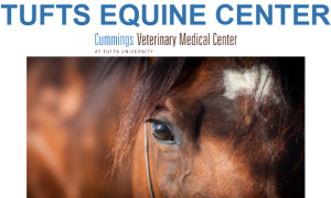 Tufts Equine Center Banner