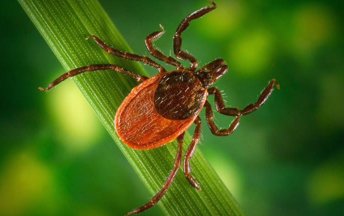 Warming Climate May Limit Lyme Disease's Spread in Parts of the U.S.