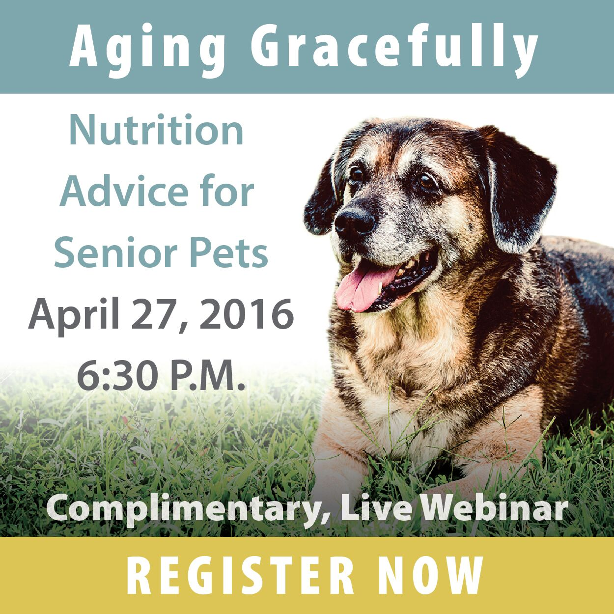 Aging Gracefully: Nutrition Tips for Senior Pets