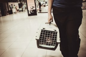 Safe Airline Travel With Your Cat