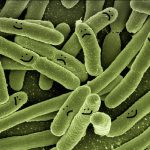 bacteria-with-faces