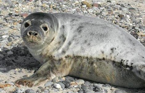 Public Attitudes Towards the Seals of Nantucket