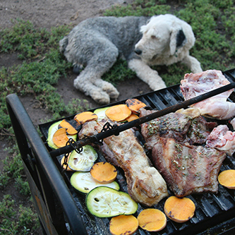 Keeping Your Pets Safe at Cookouts