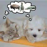 cat-and-dog-exotic-dreams