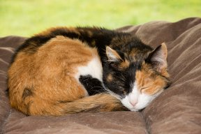 The Top 7 Changes In Cat Behavior