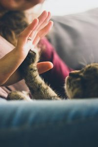 cute cat high five