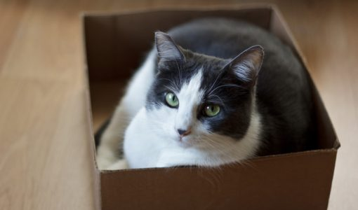 #CatSquare explained: Why can't cats resist thinking inside the box?