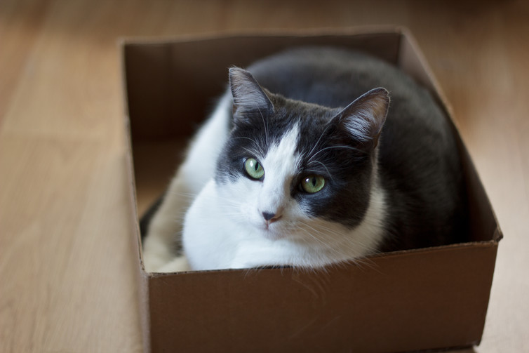 Image for #CatSquare explained: Why can't cats resist thinking inside the box?
