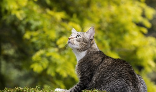 Dear Doctor: Do Cats Fade as they Age?