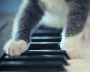 cats paws on piano keys