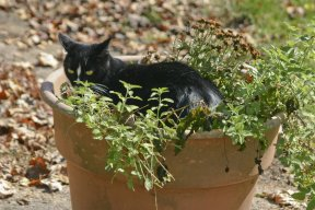 cat sitting on top of plant in a pot outside