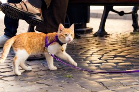 How Cat Collars Can Provide Safety