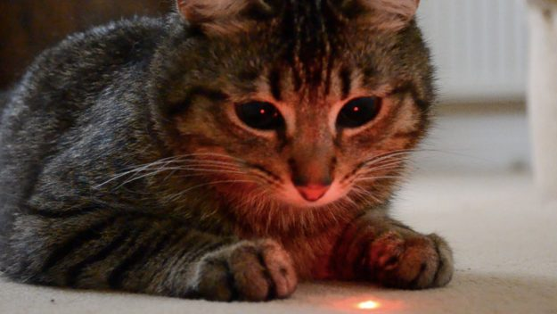 Here's Why Cats Go Crazy Over Laser Pointers