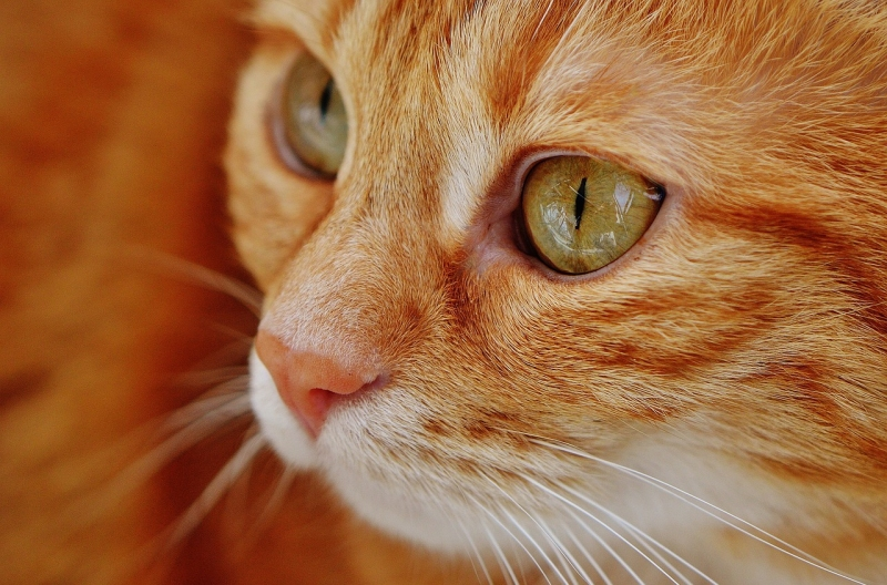 Study: Income is Major Factor When Owners Avoid Sterilizing Cats