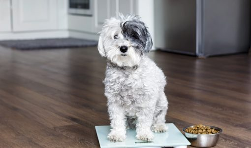 7 Causes of Weight Loss in Pets