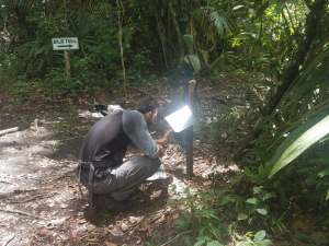 Checking a camera trap, with a metal hood attached to the top in order to prevent rain damage