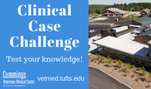 Clinical Case Challenge: Just Another  Neurological Symptom?
