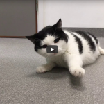 clinical case challenge neuro cat video
