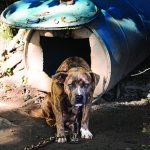 combatting dogfighting
