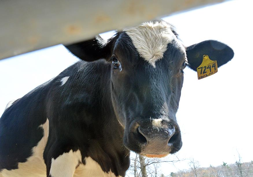 Farmed Animal Welfare: Changing Laws, Changing Public Perceptions and the Massachusetts Ballot Initiative