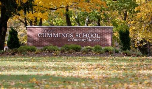 Cummings School announces 2014 Service Fund recipients