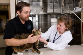 © MarkHatfield/Getty Images It can be daunting when an owner is first told he should start giving insulin injections to his cat at home. But with instruction, most people can do it easily.
