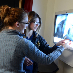 At Your Service: Diagnostic Imaging