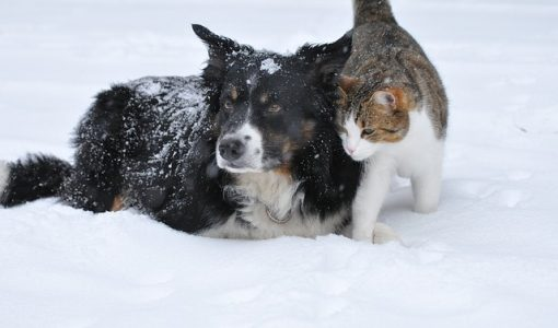 7 Activities for You and Your Pets During the Winter and Holiday Season