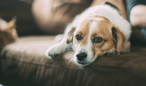 Getting to the Root Causes of Dog Behavior