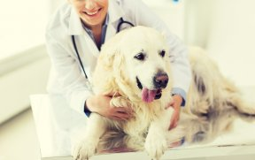 If you adjust your dog to being touched all over, she will have a better chance of enjoying a good relationship with her doctor.