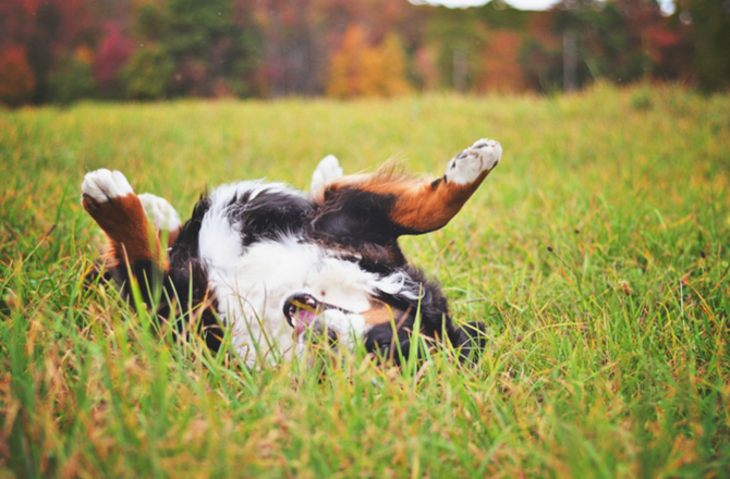 5 Behaviors That Show Your Dog's Wild Side