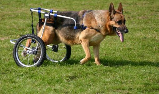 Fighting canine ALS