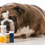 dogs and pills