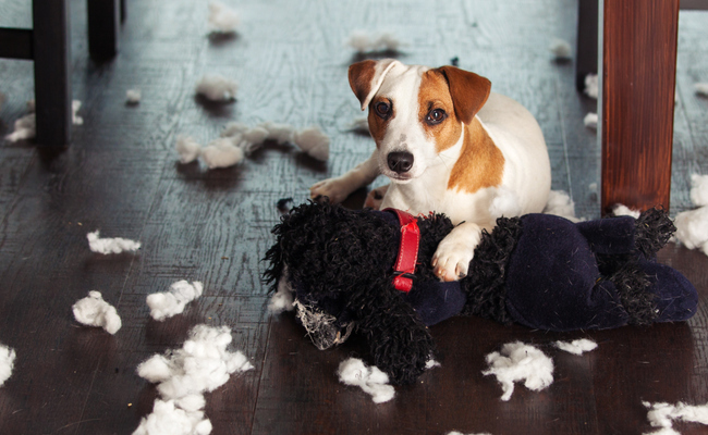 Dogs Eat the Darnedest Things: All About Intestinal Obstructions