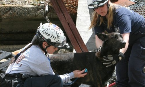 Search and Rescue Dogs:    Veterinarians, the  Rise of the Working Dog, and the Human-Animal Bond