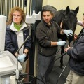 Digesting the Facts: Equine Ulcers