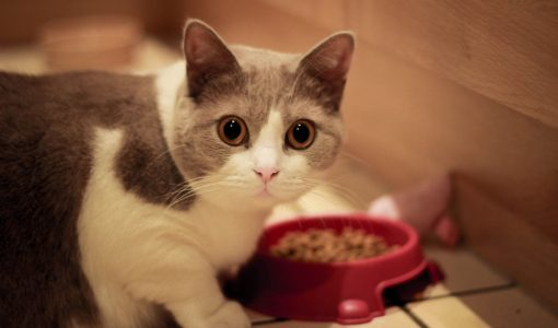 A big pawprint: The environmental impact of pet food